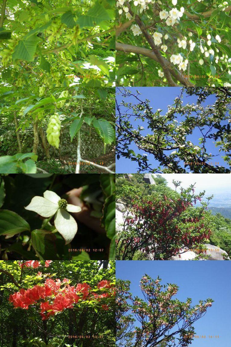 釈迦ガ岳を彩る花たち