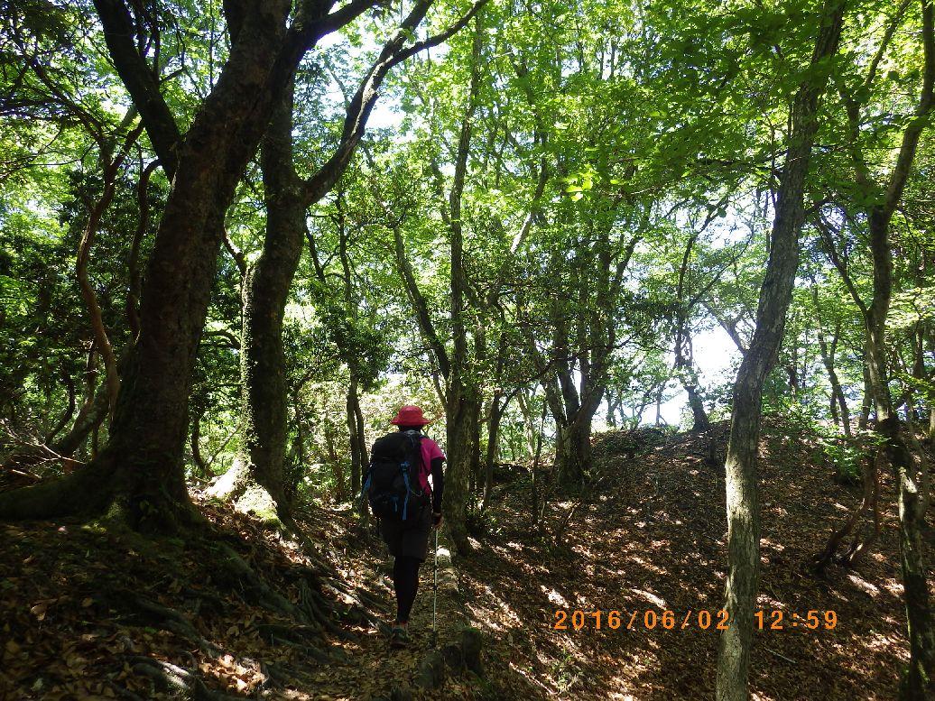 広葉樹林を行く