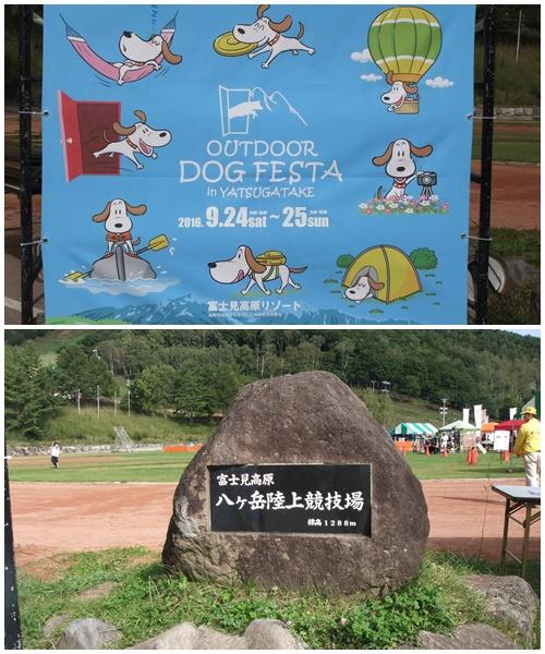 DOG-1.jpg