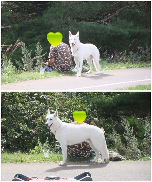 DOG-10.jpg