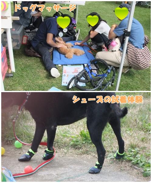 DOG-9.jpg