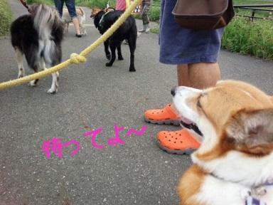 小夏ー散歩3