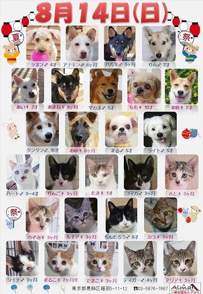 ALMA ティアハイム 8月14日 参加犬猫一覧