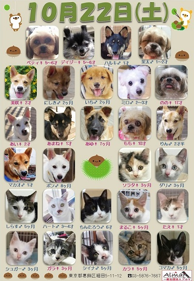 ALMA ティアハイム 10月22日 参加犬猫一覧