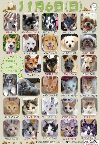 ALMA ティアハイム 11月6日 参加犬猫一覧