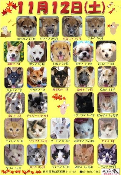 ALMA ティアハイム 11月12日 参加犬猫一覧