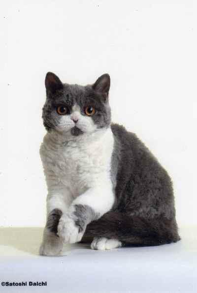 カタログ用 Kitten18th