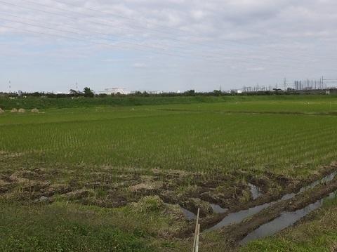 六兵衛土手と横内の田んぼ