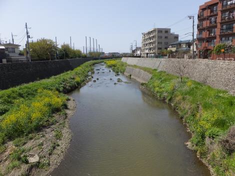 吉澤橋より野川上流を望む