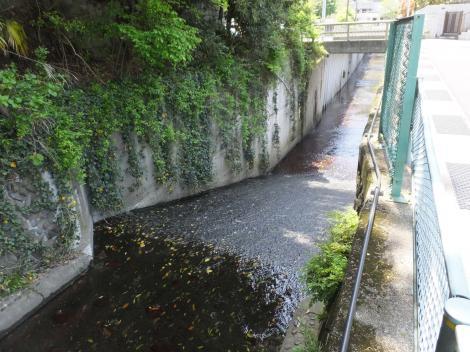 等々力渓谷南端矢川橋付近