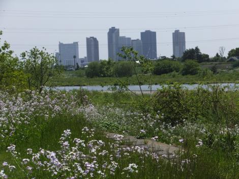 谷沢川河口付近より対岸を望む