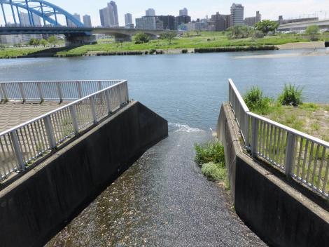 調布排水樋管から多摩川へ合流する丸子川