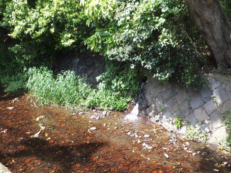 丸子川左岸に湧水が流入・岡本公園
