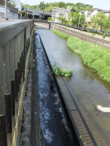 仙川浄化施設・右岸寄り水路