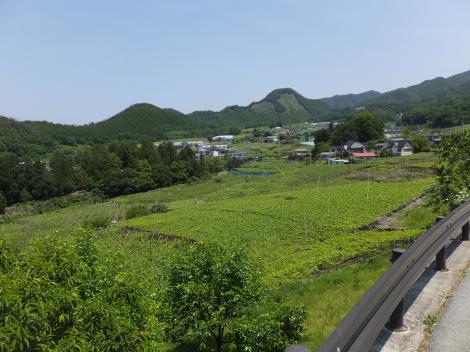 ブドウ畑・勝沼ぶどう郷駅付近