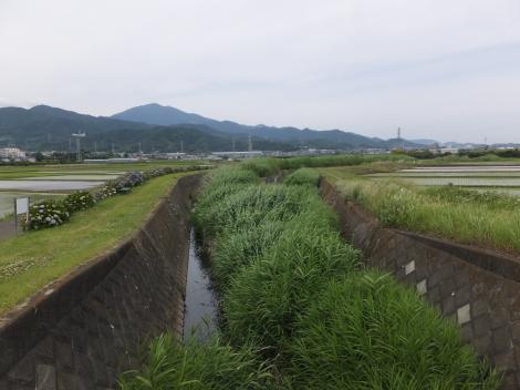 矢茂井橋より善波川上流を望む