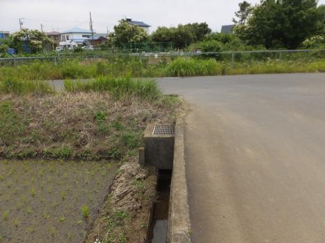 秦野市鶴巻舞台の田んぼと用水路