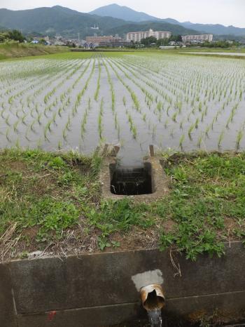 秦野市鶴巻舞台の田んぼと排水路
