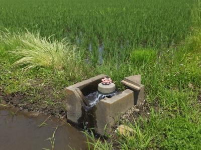 田んぼの給水栓・新木新田