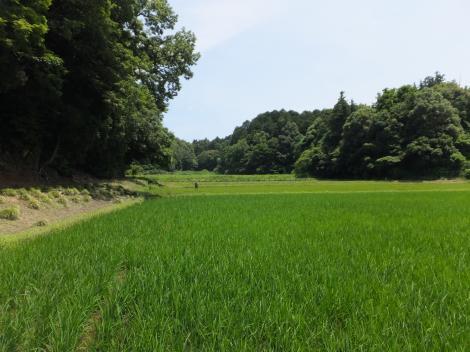 泉揚水機場付近の谷戸田