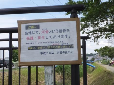 貫抜川放水路・河骨保護の会案内板