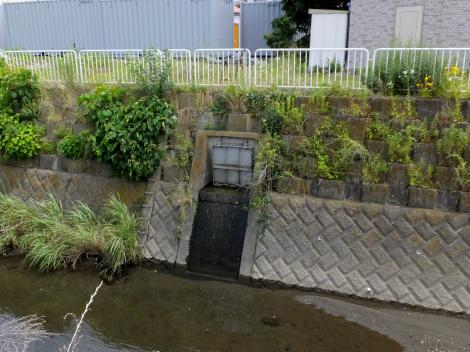 目久尻川柏ヶ谷堰用水路の放流口