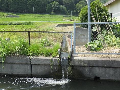 徳島堰へ排水する用水路