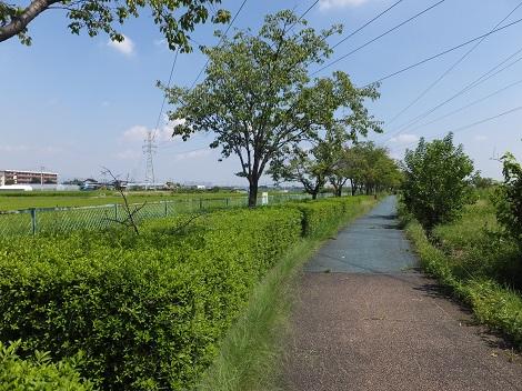 長野堰遊歩道