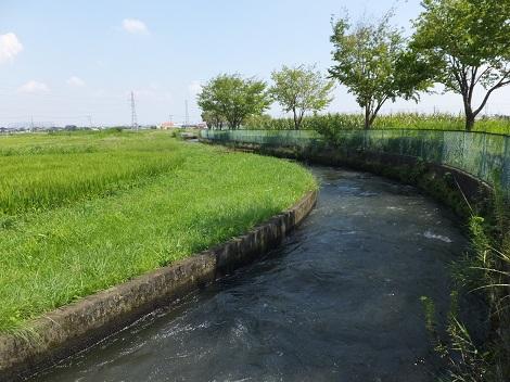 長野堰左岸の田んぼ