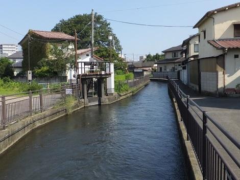 長野堰・大橋3号橋下流