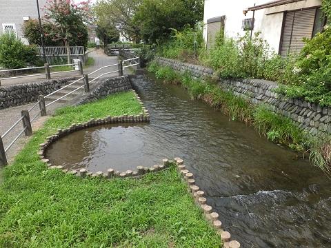 大丸用水・親水公園ケヤキの池広場