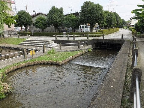 大丸用水・親水公園ヤナギの池広場
