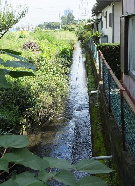 愛甲堰から始まる用水路・愛甲小付近