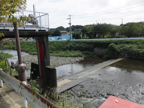 新玉川・小野橋上流