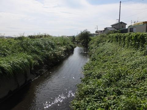 吉際堰管理橋より笠張川下流を望む