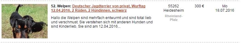 ドイツ インターネット 犬販売