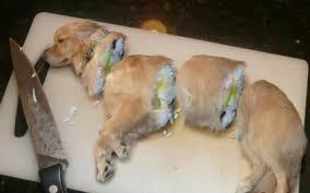gegenhund 犬肉レシピ1 (284x177)