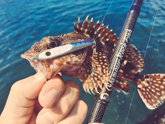 20160523001_バイスライダーで釣れたガラカブ