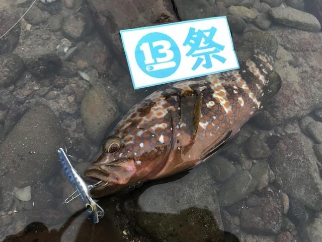 20161023003_キジハタ