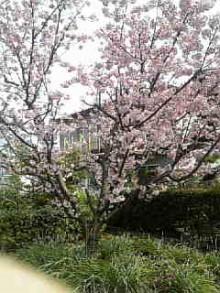 岩本社会保険労務士事務所 みかんの国愛媛で働く社労士のブログ-Image363.jpg