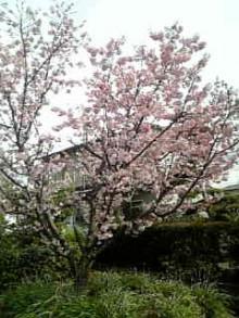 岩本社会保険労務士事務所 みかんの国愛媛で働く社労士のブログ-Image364.jpg