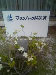 岩本社会保険労務士事務所 みかんの国愛媛で働く社労士のブログ-Image1000.jpg