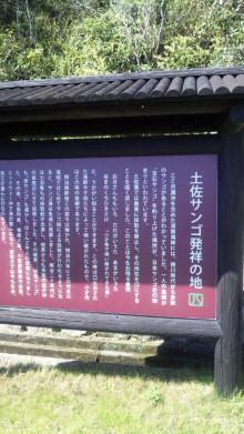 みかんの国愛媛で働く社労士岩本浩一-SBSH1416.JPG