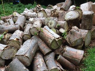 薪小屋の修理081504