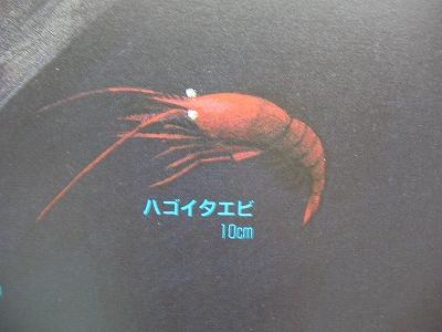 20160807 (8)