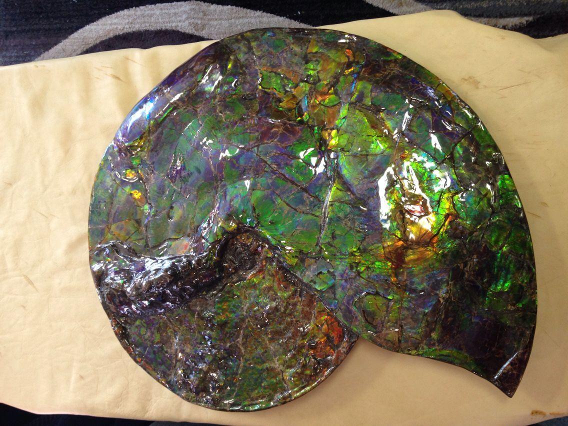 2016 斑彩螺 加拿大斑彩石5 20-14CM 388000元 500万円