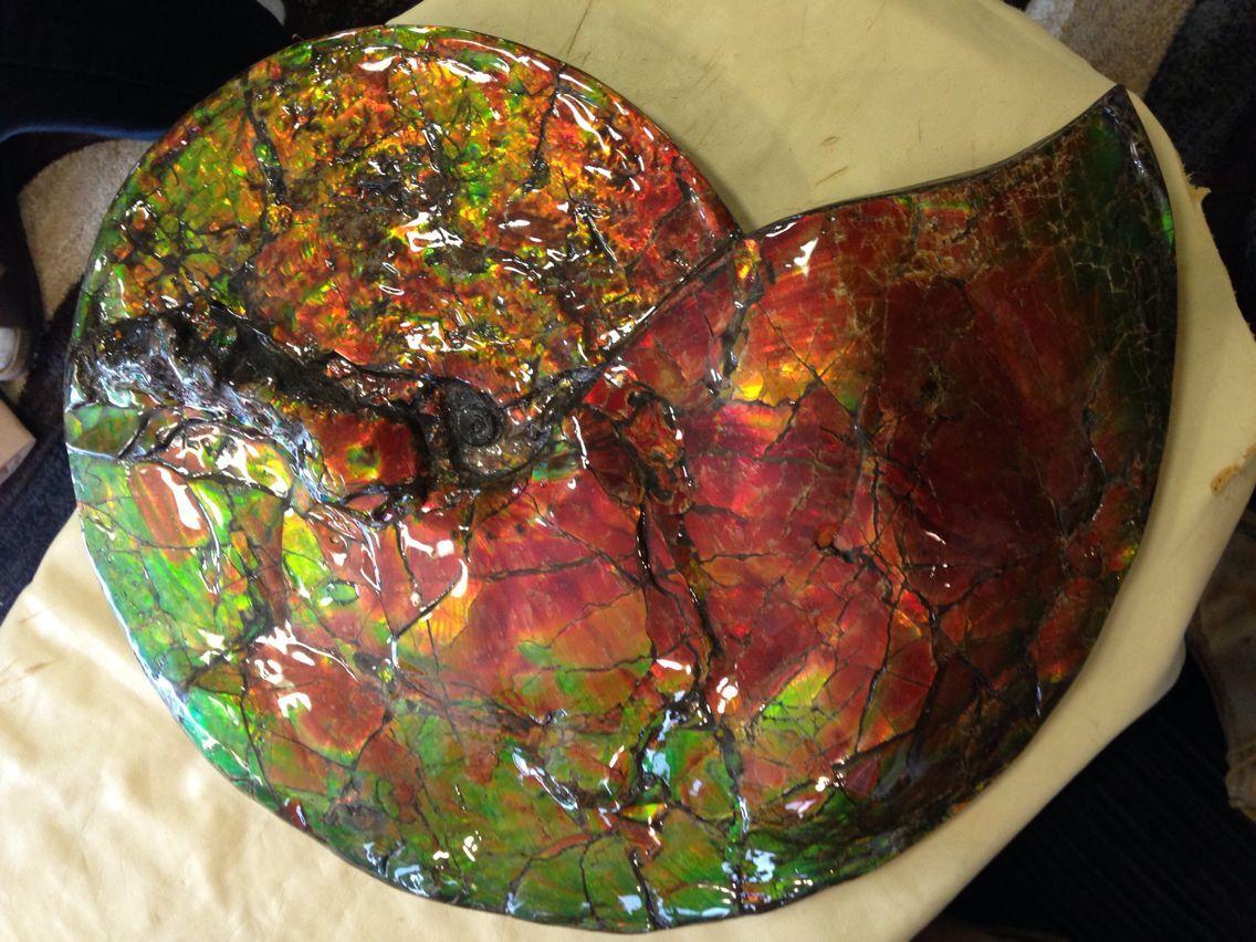 2016 斑彩螺 加拿大斑彩石3 17-14CM 388000元 500万円