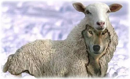 s  羊頭狗肉1