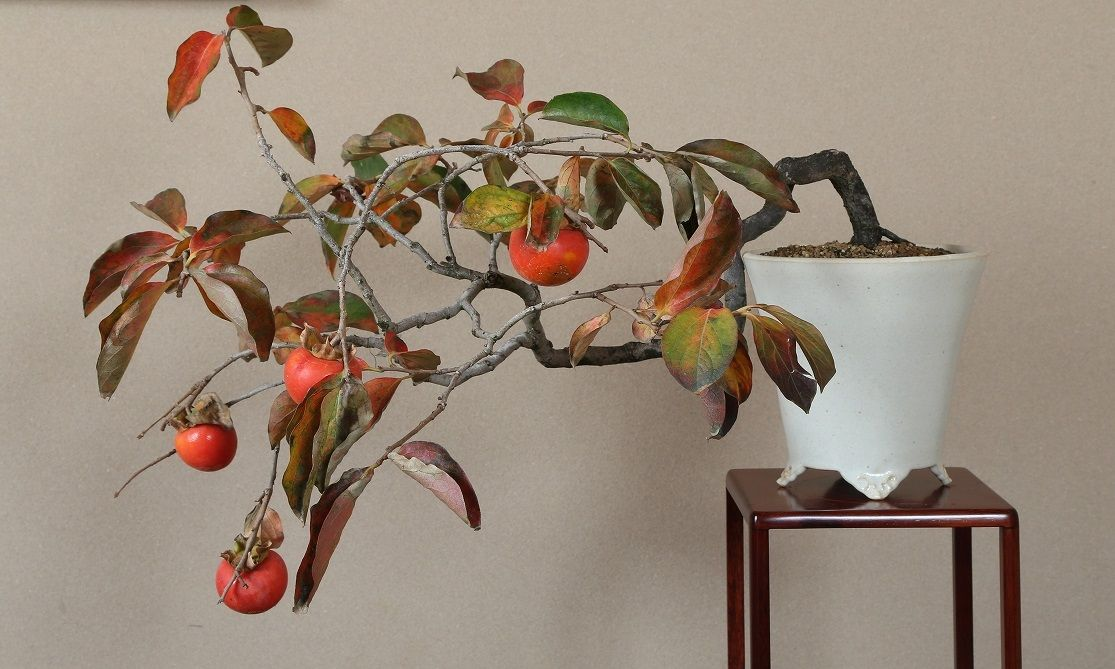 2016 水石飾り 盆栽飾り 山柿の一席2
