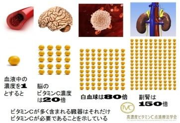 副腎とビタミンC